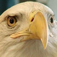 Northside Eagles
