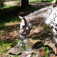 WELLStarted Horsemanship