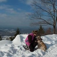 Mountain View dog grooming