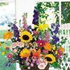 Jeannette's Bloomers