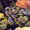 Buckhead Blooms Flower Shop