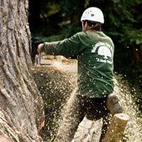 WARANER BROS TREE SERVICE