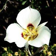 Wildflower Quilting