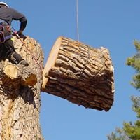 Ax Men Tree Service