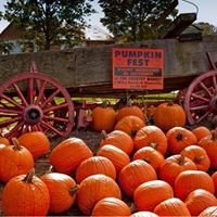 Pumpkinfest by Country Pumpkins