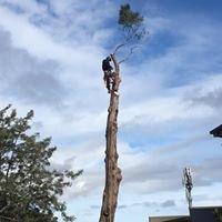 Tree Amigos