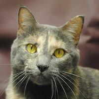 Cat Clinic of Folsom