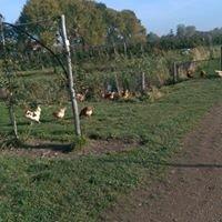 Fruittuin Van West