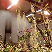Nüdlinger Orchideenladen Inh. Kurt Beck
