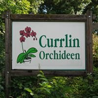 Currlin Orchideen