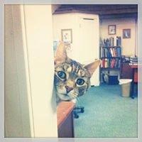 Northford Veterinary Clinic