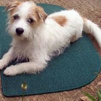 Pawsitive Effects Dog Training