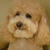 Shaynedoro Pet Beauty Salon