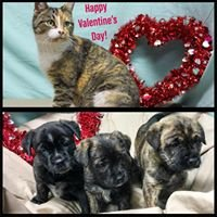 Tri-County Animal Shelter - Clearfield, Ky