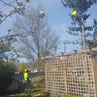 Millar Tree Care