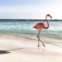 Schooner Hotel and Beach Suites Resort