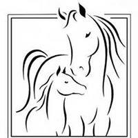 Greystone Veterinary Service, P.A.