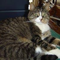 Happy Tails Animal Rescue, Owego