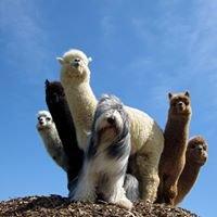 Gibraltar Bay Alpacas
