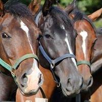 Millhaven Horse Farm