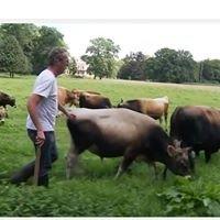Natuurzuiver Jersey rundvlees