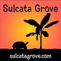 Sulcata Grove