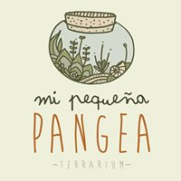 Mi Pequeña Pangea Terrarium