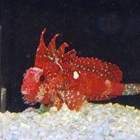 Arizona Custom Aquariums