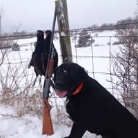 River Valley Pheasant  Hunting