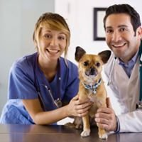 SpayXperts, Spay Neuter & Well Pet Care