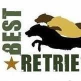 Best Retrievers