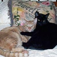 Furry Friends Pet Sitting LLC