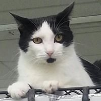 Cat Rescue Coalition