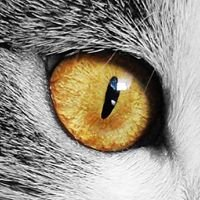 Animal Eye Center