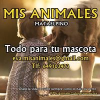 Mis Animales Mataelpino