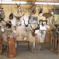 rhodes brothers taxidermy and game processing