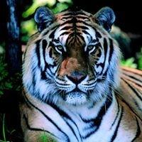 Tiger Bayou CrossFit