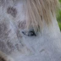 LEAP Equine Facilitated Psychotherapy and Learning/Facilitator Training