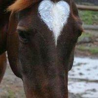 Horses Help Hearts Heal