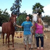 Healing with Horses Israel הילינג עם סוסים ישראל