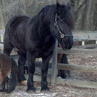 HorseSense Therapeutic Riding Center