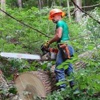 Black Horse Logging