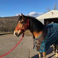 Serendipity Therapeutic Riding Program LLC