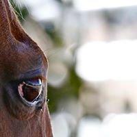 Horse Vision Centre