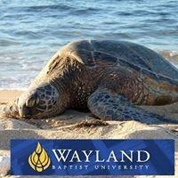 Wayland Baptist University Hawaii