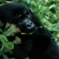 Primate Nutritional Ecology Research Group