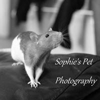 Sophie's Pet Photography