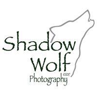 Shadow Wolf Photography