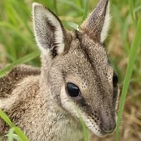 UQ Native Wildlife Teaching and Research Facility