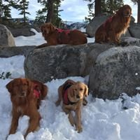 Sierra Avalanche Dogs